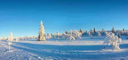 Snowy panorama, frozen trees in winter in Saariselka, Lapland, Finland Фото со стока - 114887248