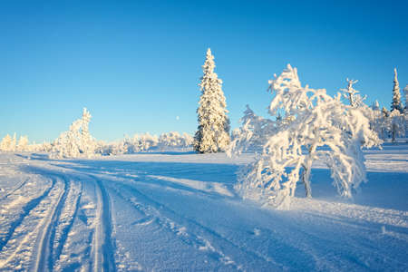 Snowy landscape, frozen trees in winter in Saariselka, Lapland, Finland Stock Photo