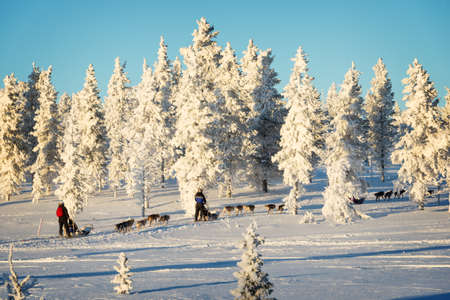 Husky dog sledding in Lapland, Finland