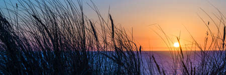 Sunset on atlantic ocean, beach grass silhouette in Lacanau France Stok Fotoğraf