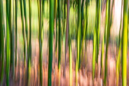 Abstract bamboo forest background, vertical motion blur