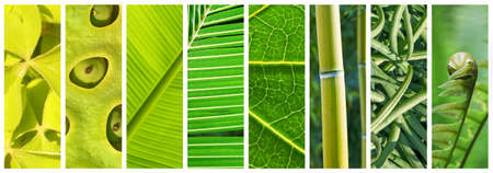 NaturalShades of green panoramic collage, green color in nature concept