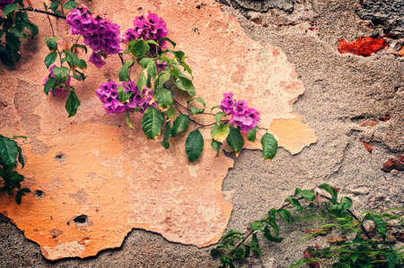 Pink bougainvillea on a wrecked wall, vintage background