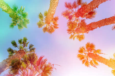 Looking up at palm trees, colorful light