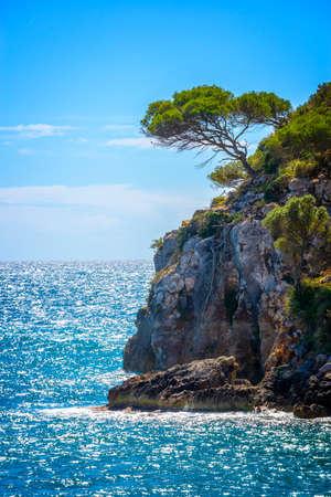Kiefer auf einem Felsen am Meer, mediterrane Landschaft in Menorca Balearen, Spanien