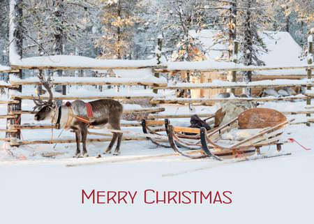 Christmas card, reindeer sleigh waiting for Santa in winter, text Merry Christmas Stok Fotoğraf