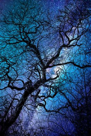 Silhouette of a twisted tree in winter, strary night background