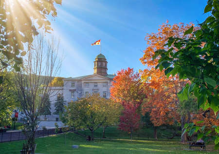 Orange trees in the park at McGill University campus in autumn, Montreal Quebec, Canada