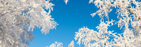 Snowy trees from below agoinst blue sky, winter panoramic background with copy-space