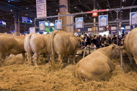 Visitors admiring cows at the Salon the lAgriculture (agricultural show) in Paris, France Editorial
