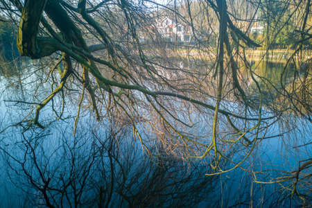 Reflections of branches in the water at the Etang de Corot in winter in Ville dAvray near Paris, France