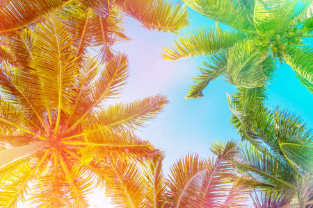 Colorful sky and palm trees view from below, vintage summer background Banco de Imagens