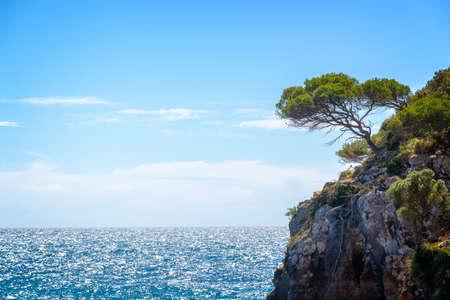 Pine tree on a rock by the sea, mediterranean landscape in Menorca Balearic islands, Spain