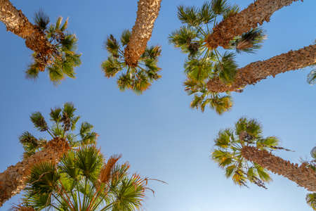 Looking up at palm trees, blue sky background