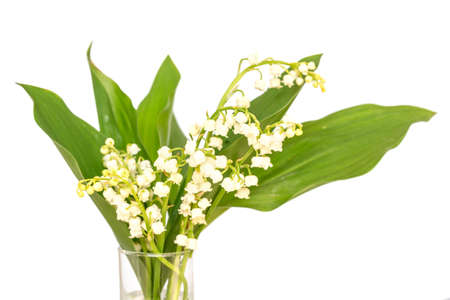Bouquet of Lily of the valley flower blossoms, isolated on white background. May 1st, Labor Day symbol Stock Photo