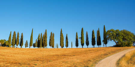 Beautiful typical panorama with cypress trees alley in Tuscany, Italy  Stock Photo