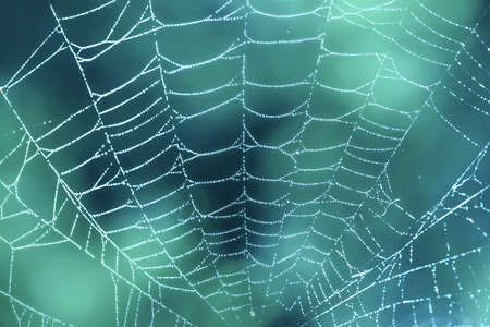 Spider web close up with dew drops on blue teal background Stock Photo