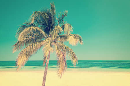 Palm tree on a beach in Cayo Levisa Cuba, vintage style process