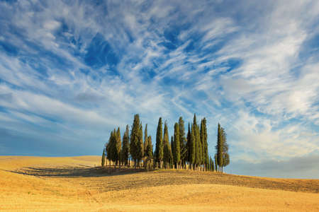 Beautiful typical tuscan landscape with cypress trees in a field in summer, Val d'Orcia, Tuscany, Italy
