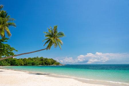 Tropical beach landscape with palm trees on Bintan island, Indonesia