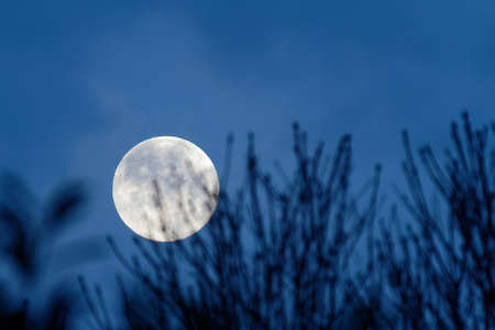 Close up of the full moon rising at night behind silhouettes of tree branches