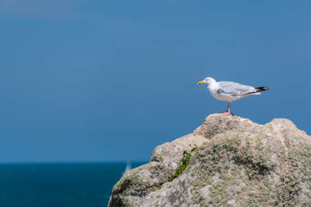 Seagull on a rock on blue sky background