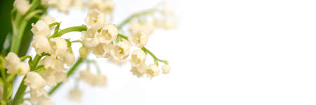 Lily of the valley flower blossom, white panoramic background. May 1st, May Day web banner Stock Photo
