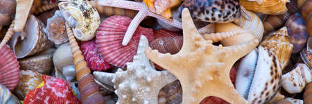Seashells and starfishes, beach and summer panoramic background