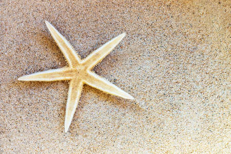 Close up of a starfish on the sand of a beach