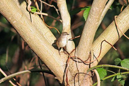 inoffensive: Little wild bird blends in