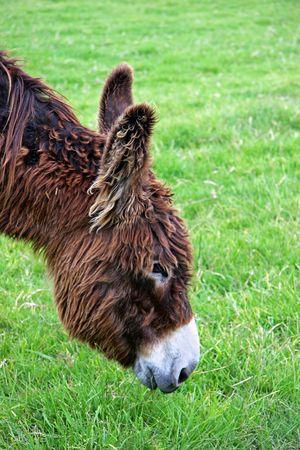 Chocolate Donkey Stock Photo - 3890741