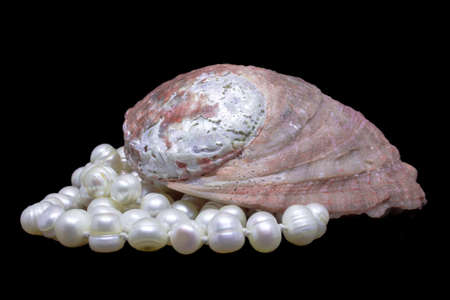 Natural Shell and string of white pearls on black background