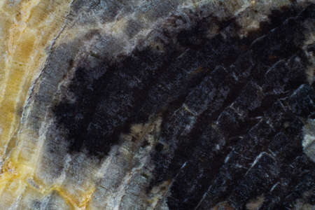 Natural piece of saw cut of petrified wood close up texture 스톡 콘텐츠