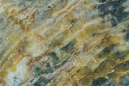 Natural piece of saw cut of petrified wood close up texture 스톡 콘텐츠 - 129106020