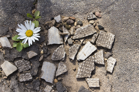 ruberoid: Texture chamomile on the rocks and roofing material