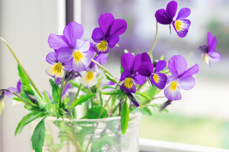 Wildflowers Pansies on the windowsill. The flowers on the window Stock Photo