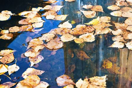 Autumn leaves background. Fallen leaves in a puddle 写真素材
