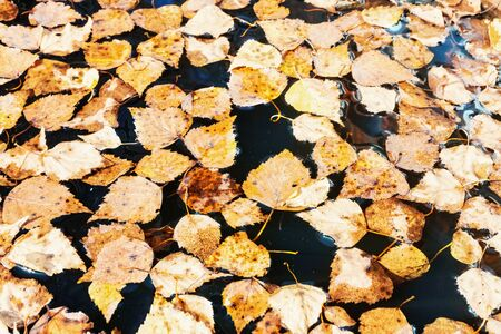 Fallen leaves in the water. Autumn leaves background