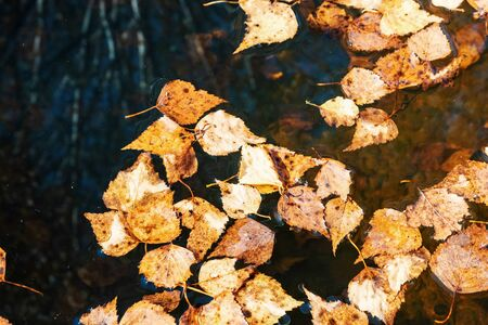 Fallen yellow leaves in a puddle. Autumn leaves background