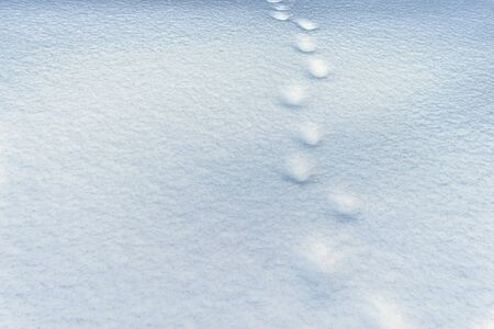Footprints in the snow. Winter snow background