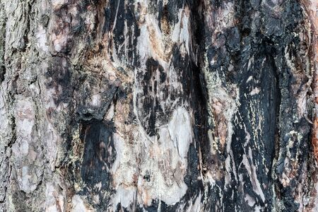 The charred wood. The texture of the burnt tree bark