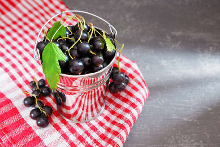 Fresh blackcurrant in a decorative aluminum bucket on a red napkin on a gray background.
