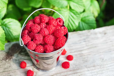Bucket of fresh raspberries on a green tree leaf background on a wooden background in the garden.