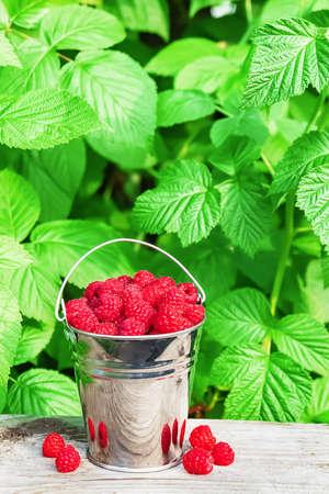 Raspberries in a bucket in the open air. Zdjęcie Seryjne