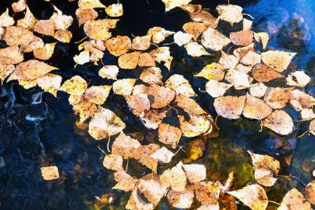 Yellow autumn leaves lie in the water Zdjęcie Seryjne