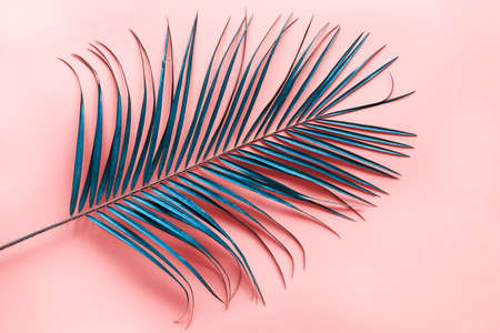 Abstract blue palm leaf on pink background. 免版税图像