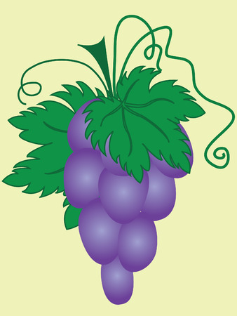 Ripe purple grapes with green leaves Vector