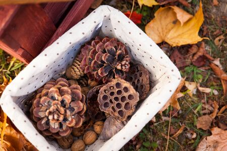 sweet treats: Seasonal decorations in jars, choco bars, sweet treats, candle. Sweet picnic in autumn park Stock Photo
