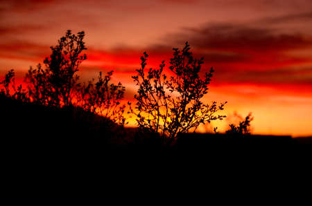 Brilliant desert sunset sillouetting sagebrush  Фото со стока