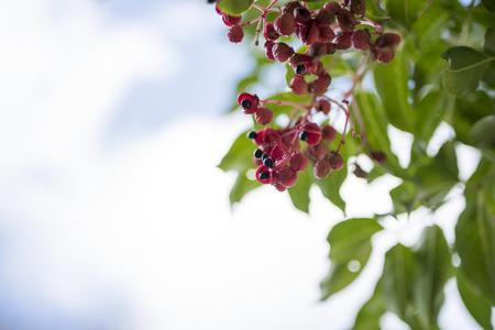 berry: wild berry